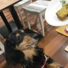 愛犬とカフェへ!ティータイム&撮影会♡cafe amato@王禅寺