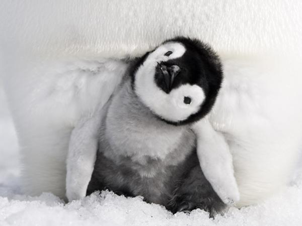 間もなく公開!!「皇帝ペンギン  ただいま」の試写会に行ってきました