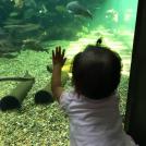 1日食べて遊べる「川島PA」は子連れ必見!オアシスパーク&アクア・トトぎふ【各務原】