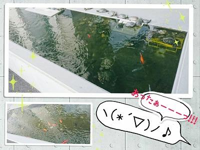 新大宮警察署の池