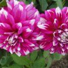 札幌市北区★百合が原公園で花を観ながら楽しくお散歩♪