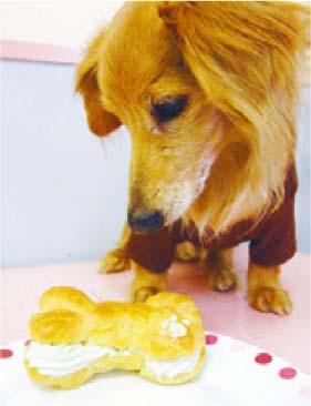 犬の食物アレルギーには正しい食事を選んで!
