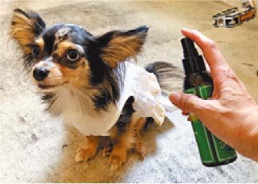 ペットの感染症予防。場面にあわせた防虫