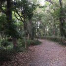 涼しくなってきました~散策してみよう~谷戸山公園