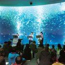 名古屋港で魅力発見!3年目で定着、音楽とアートのイベント「アッセンブリッジ・ナゴヤ2018」