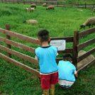 【岩沼市】癒し系もふもふで可愛い羊に無料で触れ合える場所!毎週第三日曜日はイベント開催!