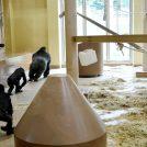 イケメンゴリラ新居の住み心地は?「東山動植物園」新ゴリラ・チンパンジー舎オープン