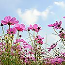 色とりどりの花に出会うお散歩やお出かけを楽しみましょう!