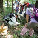 野生キノコがかわいい!愛知県森林公園で「野生きのこ判別講習会」