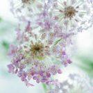 【Q】頂いたお花を長く楽しむには?