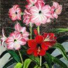 70点余のパステル画の作品展「わくわくカレッジ 第3回パステル画展」町田市民ホール