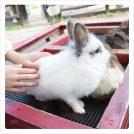動物ふれあいが楽しすぎるー♪秋の東松山「埼玉県こども動物自然公園」の巻