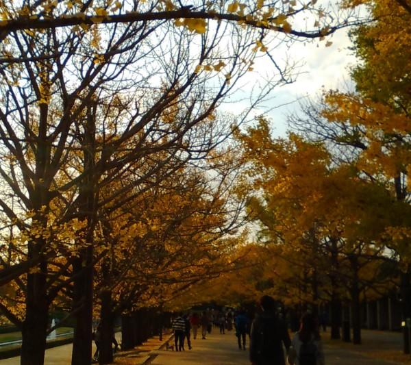 レンタルでもマイ自転車でも!昭和記念公園、秋風サイクリングのススメ♪