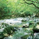 私たちの水はどこから? かながわ水源の森林をシラセさんが調査