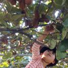 多摩エリアで楽しめる 味覚狩り&収穫体験