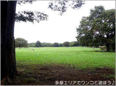 昭和記念公園みんなの原っぱ