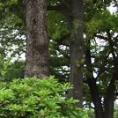 【八王子】「木材のリラックス効果」を知る森林講座へ