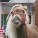 入園無料で楽しめる苫小牧「ノーザンホースパーク」で1日満喫。