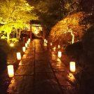 【昼も夜も楽しめる松島】紅葉ライトアップ始まりました♪