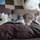 猫らしくない寝相で寝ちゃう猫