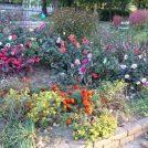無料で遊ぼう!自然豊かな緑と花の七北田公園【仙台市泉区】