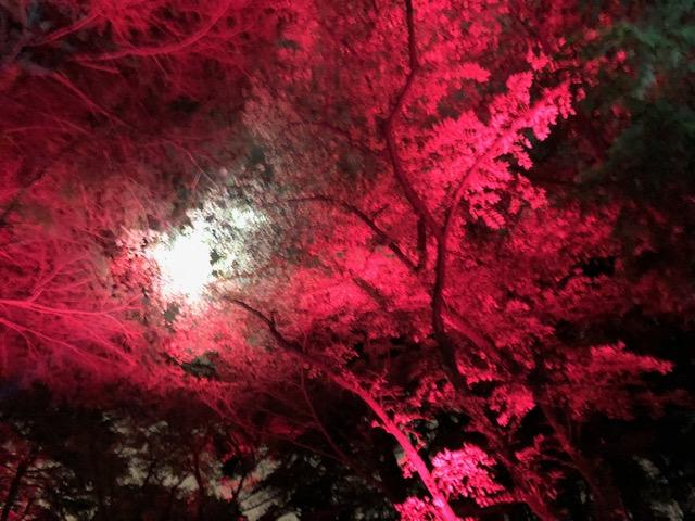 【新宿御苑】ナイトアートウォークに行ってみたよ。
