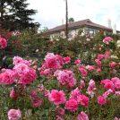 秋の花が美しい「港の見える丘公園」2018