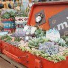 【鹿沼】多肉&サボテン萌え!ファミリーで楽しめるサンリーフマーケット