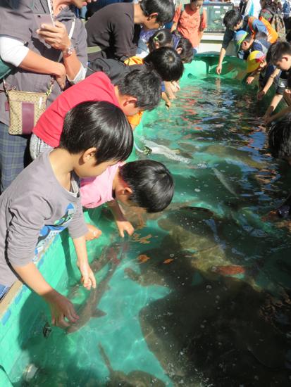 子どもと出かけよう!柴漁港の「秋のさかなフェア」