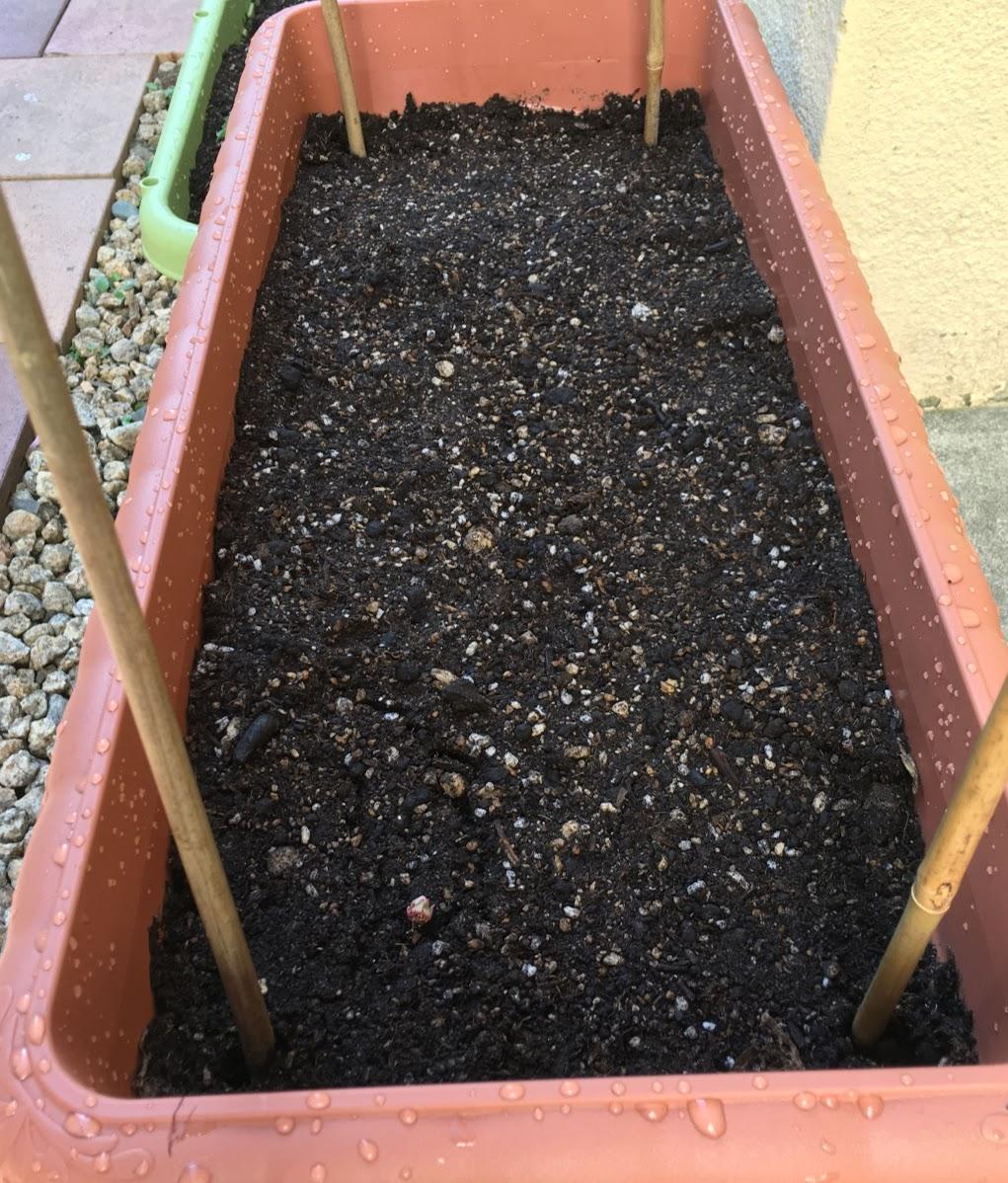 土の準備IMG_0010