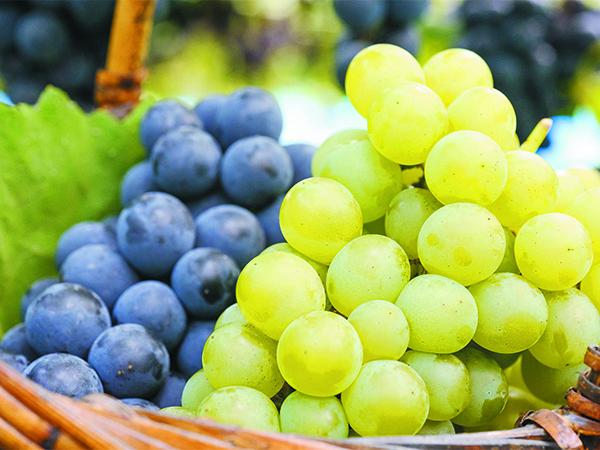 grapes_w600
