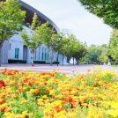 【岡山市北区】岡山初心者の方へ!近場で子どもとのんびり楽しめちゃうスポット♪岡山県総合グラウンド