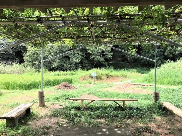 negiuchi-park15
