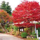 【 紅葉ガイド2018】花の山寺 普門寺(真庭市田原山上)