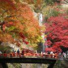 【プレゼントも】紅葉シーズン到来「箕面の滝」やイベントで秋の箕面を満喫