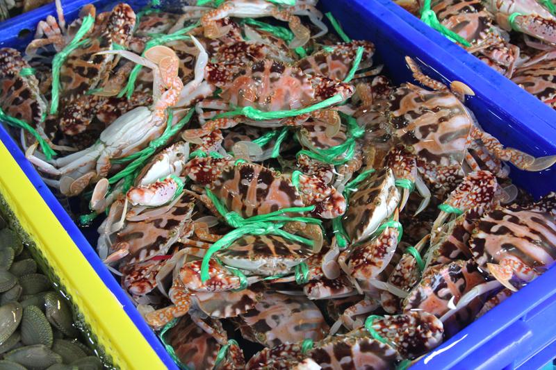 台湾の花蟹