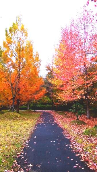 【仙台市泉区】南中山公園で紅葉を楽しもう!【駐車場有】