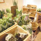 【青葉区支倉町】畑の力を感じるおいしい野菜「季節のお野菜・ぬか漬け co-taro(こたろう)」