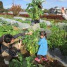 11/10(土)武蔵野市で「秋の収穫祭」を開催
