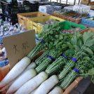 野菜が新鮮! 箕面・茨木・高槻の「おいしい野菜が買える店」6店