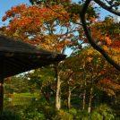 秋本番!立川「国営昭和記念公園」の秋イベント2018