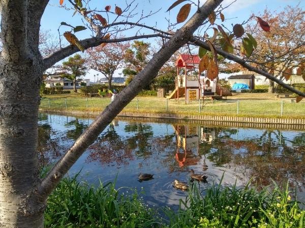 松前町の「ひょこたん池公園」で人面魚や鴨に会える&四季折々の植物
