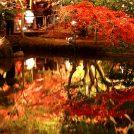 水面に映し出される「逆さもみじ」が絶景!岐阜・曽木公園のライトアップは今週末から