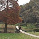 藤沢駅徒歩圏内で!?自然豊かな新林公園で気軽にハイキング
