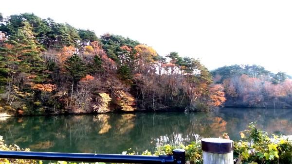 【仙台市】園内と駐車場がとにかく広い!水の森公園【紅葉も】
