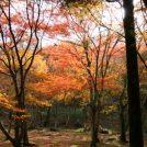 紅葉シーズン到来!愛媛のおすすめスポット第三弾@大洲稲荷山公園
