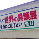 江ノ島さんぽ「世界の貝の博物館 貝広物産店」に行ってきました
