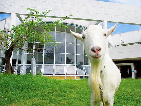 青海市民センター