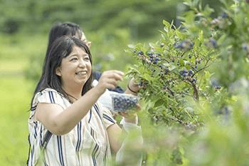 ブルーベリー園ピッコロで収穫体験