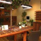 移転オープン・「木下眼鏡店」には福井県鯖江市の職人手作りのフレームが並びます